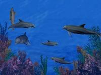 Screenshot programu 3D Dolphin Reef 4.1