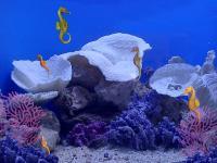 Screenshot programu 3D Seahorses 3.0