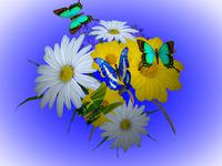 Screenshot programu 3D Wonderful Flowers 1.0.0