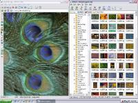 Screenshot programu Ai Picture Explorer 8.5.0.8500