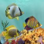 Screenshot programu Aqua Coral Reefs 2