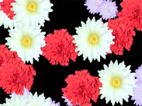 Screenshot programu Blossoming Flowers Screensaver