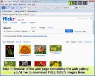 Screenshot programu Bulk Image Downloader 4.50.0.0