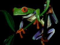 Screenshot programu Frog Screensaver 0.2