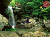 Screenshot programu Jungle Falls 2.0