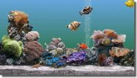 Screenshot programu Marine Aquarium 3.0.1605