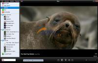 Screenshot programu Miro 5.0.2