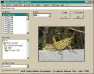 Screenshot programu NewView Graphics' File Viewer 8.0
