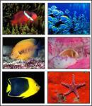 Screenshot programu Ocean Life 4 Screensaver
