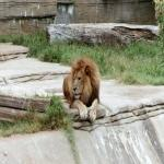Screenshot programu Oklahoma Zoo Screensaver