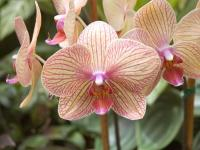 Screenshot programu Orchid Screensaver 0.2
