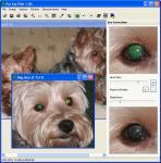 Screenshot programu Pet Eye Pilot 3.7