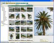 Screenshot programu PixFiler 5.3.3