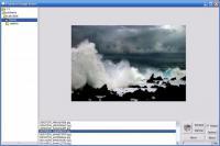 Screenshot programu Plumeria Image Sorter 1.0.7