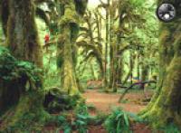 Screenshot programu Rainy Forest 1.0