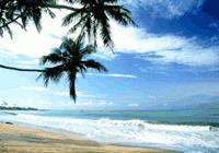 Screenshot programu Tropical Screensaver 1.0