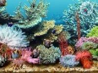 Screenshot programu Tropical Sea Life Screensaver 3.0