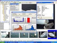 Screenshot programu Wega2 Imageviewer 1.1.0.0